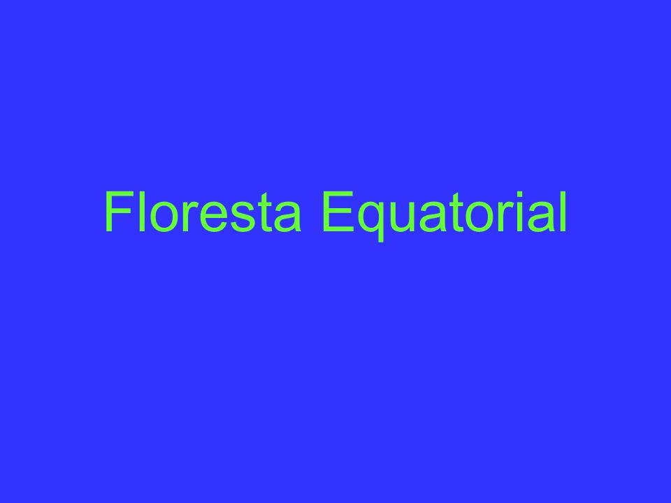 Floresta Equatorial