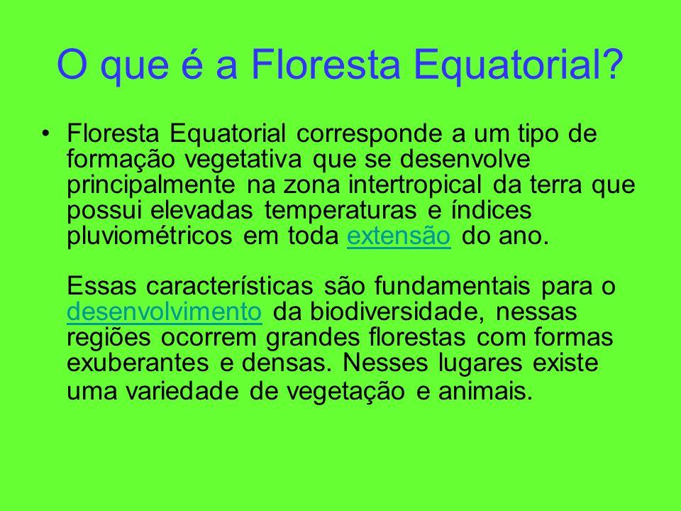 O que é a Floresta Equatorial