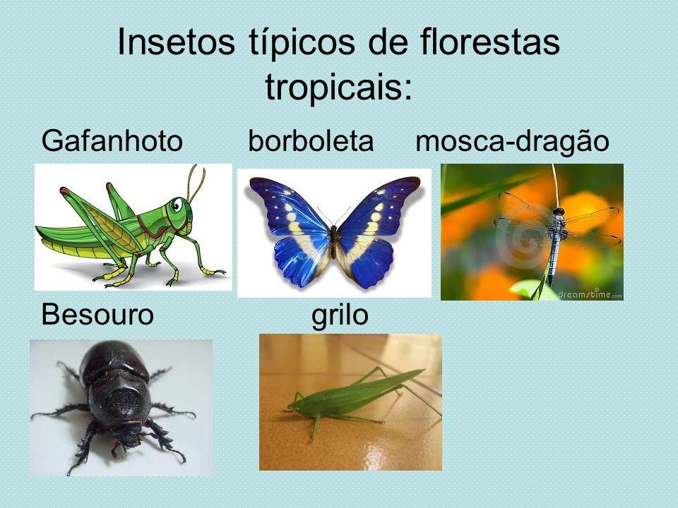 Insetos típicos de florestas tropicais: