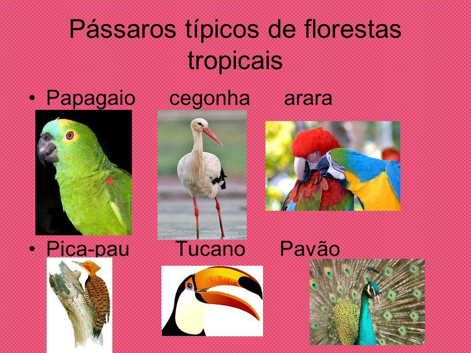 Pássaros típicos de florestas tropicais