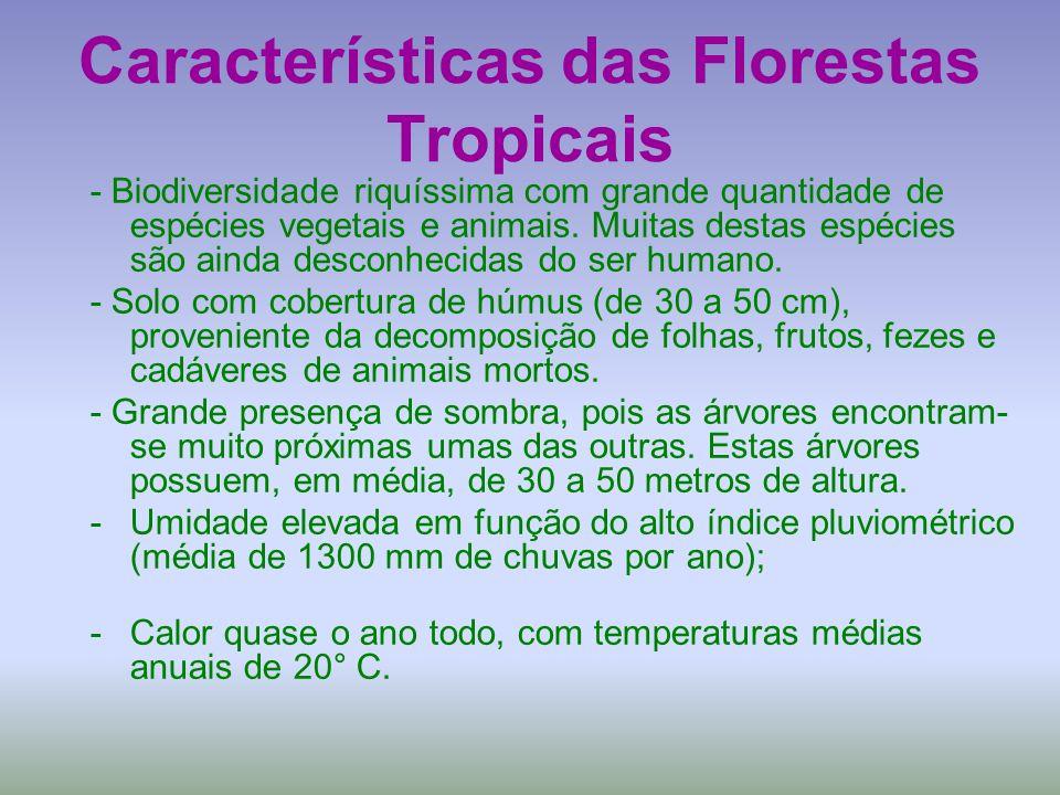 Características das Florestas Tropicais