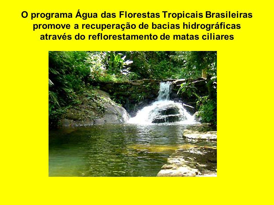 O programa Água das Florestas Tropicais Brasileiras promove a recuperação de bacias hidrográficas através do reflorestamento de matas ciliares