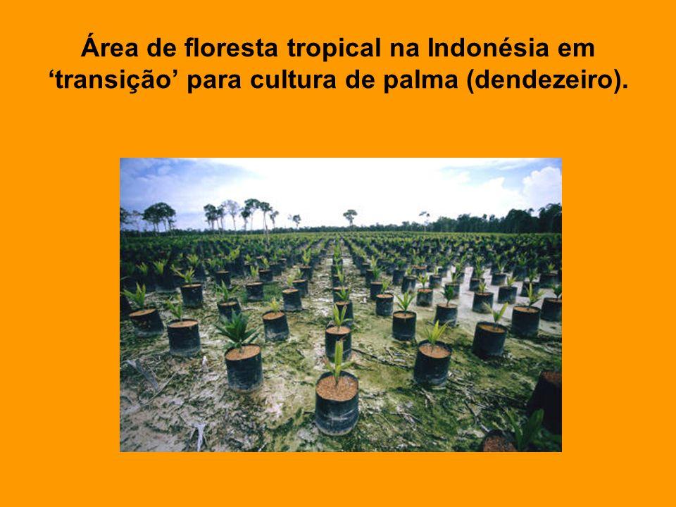 Área de floresta tropical na Indonésia em 'transição' para cultura de palma (dendezeiro).