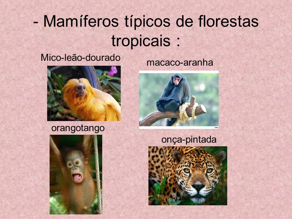 - Mamíferos típicos de florestas tropicais : macaco-aranha