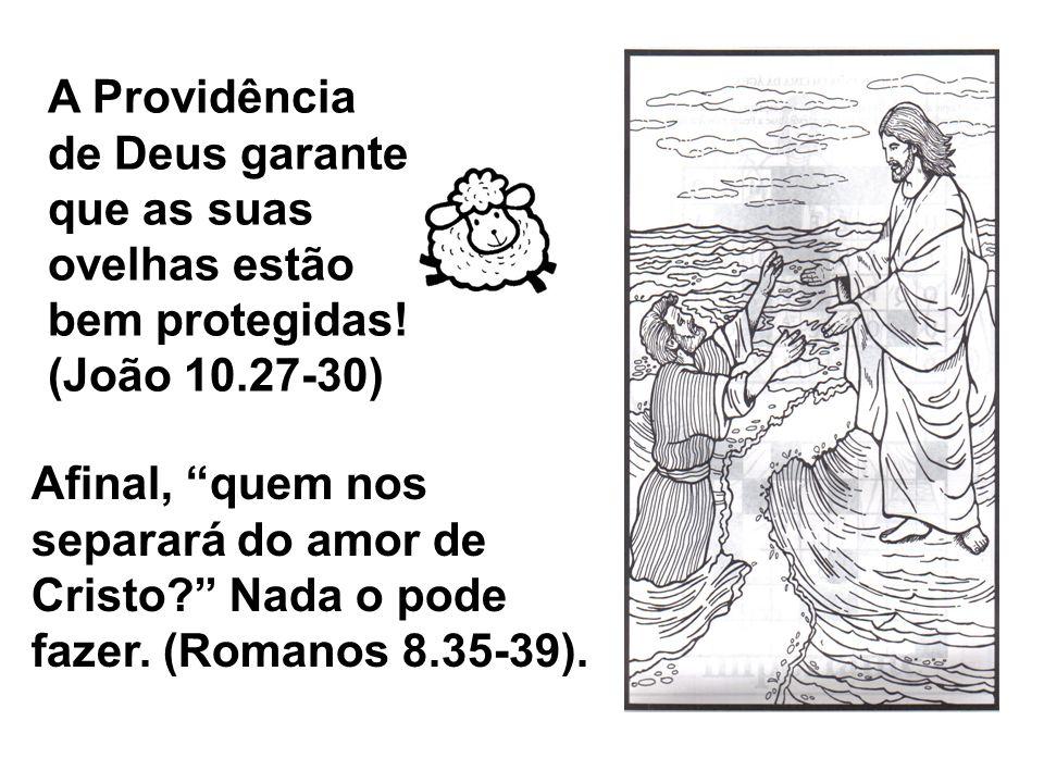 A Providência de Deus garante que as suas ovelhas estão bem protegidas