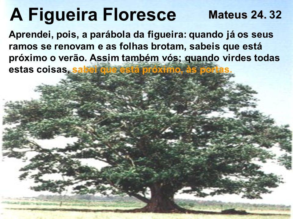A Figueira Floresce Mateus 24. 32