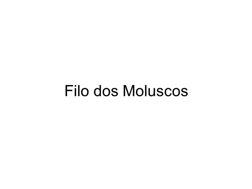 Filo dos Moluscos