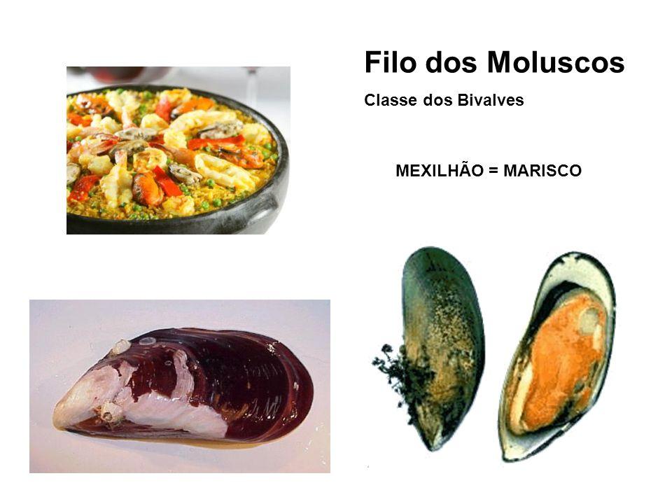 Filo dos Moluscos Classe dos Bivalves MEXILHÃO = MARISCO