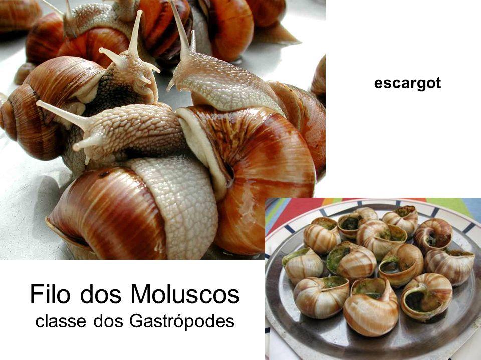 Filo dos Moluscos classe dos Gastrópodes