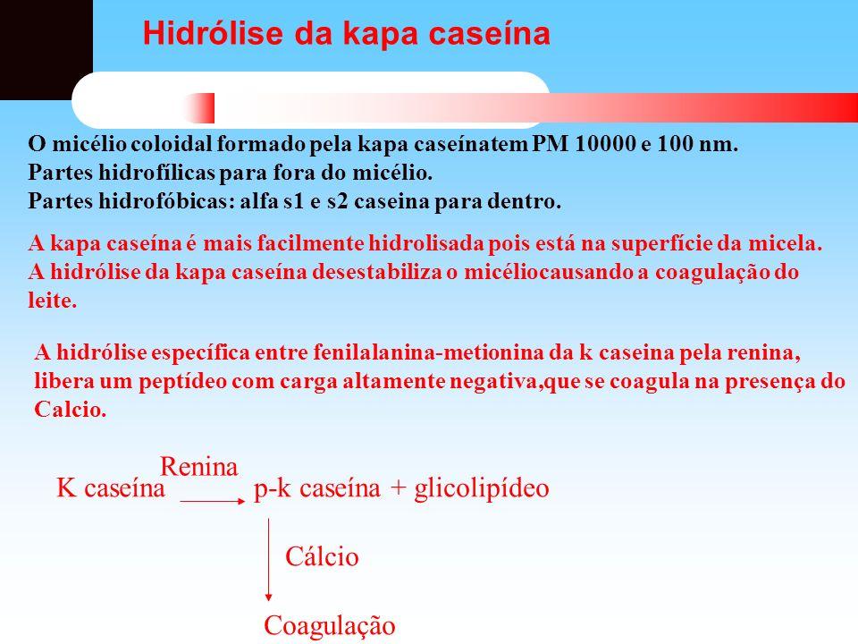 Hidrólise da kapa caseína