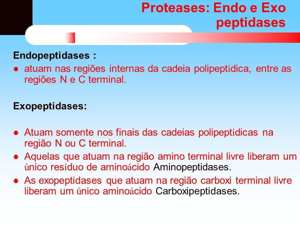 Proteases: Endo e Exo peptidases