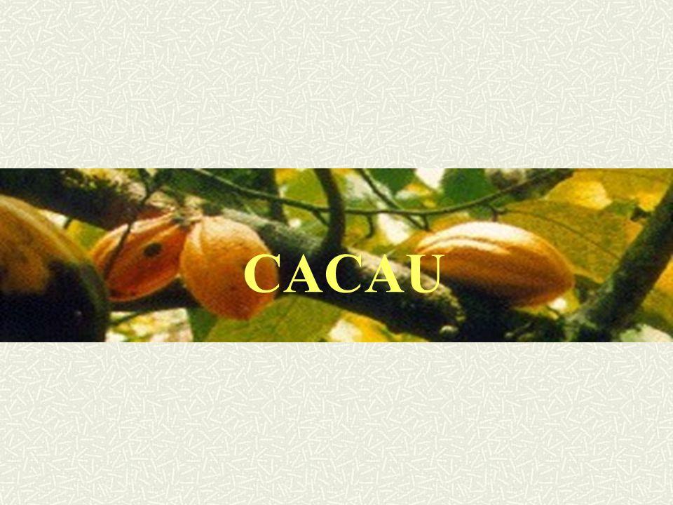 CACAU