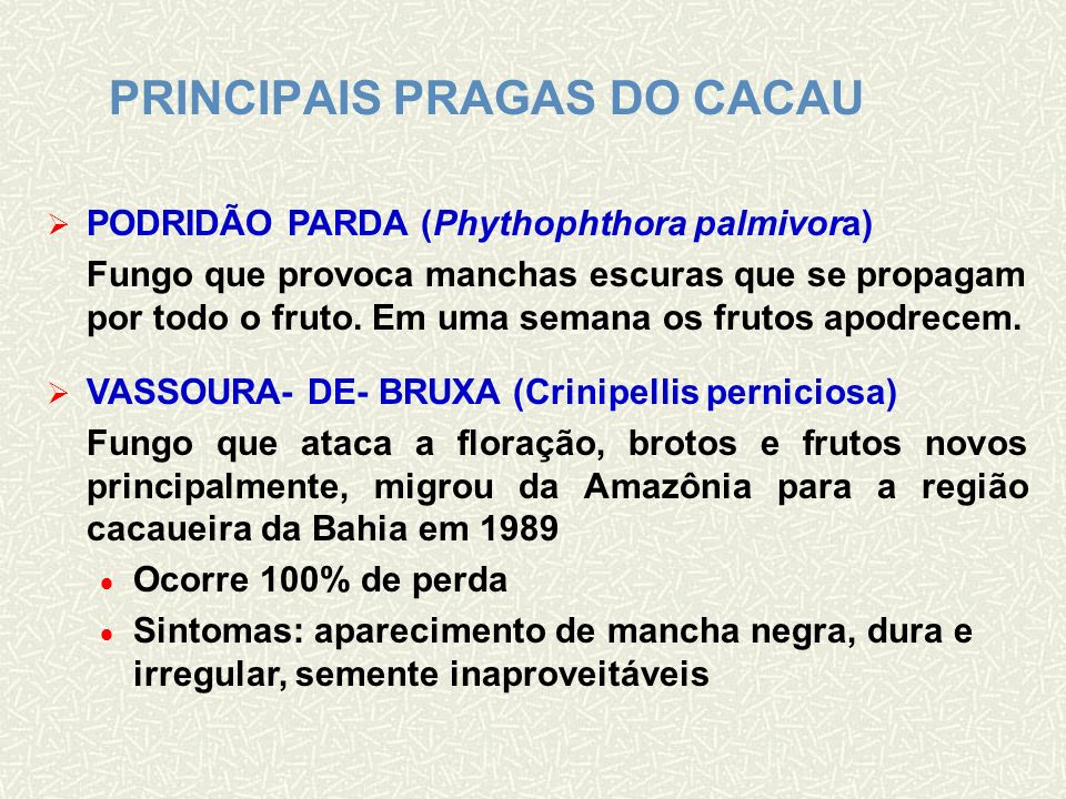 PRINCIPAIS PRAGAS DO CACAU