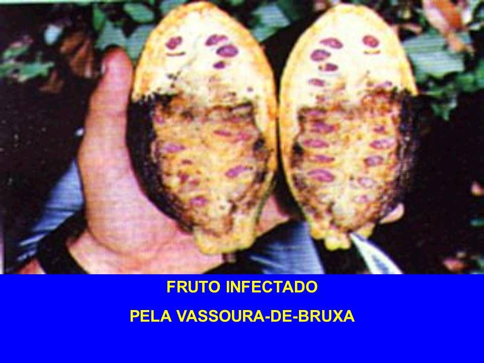 PELA VASSOURA-DE-BRUXA