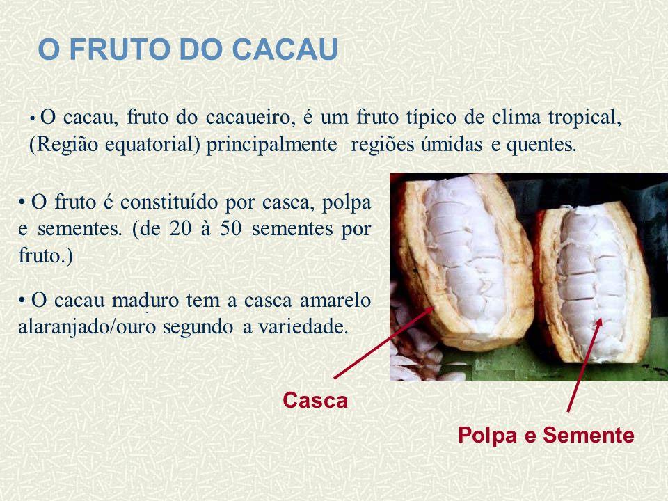O FRUTO DO CACAU O cacau, fruto do cacaueiro, é um fruto típico de clima tropical, (Região equatorial) principalmente regiões úmidas e quentes.