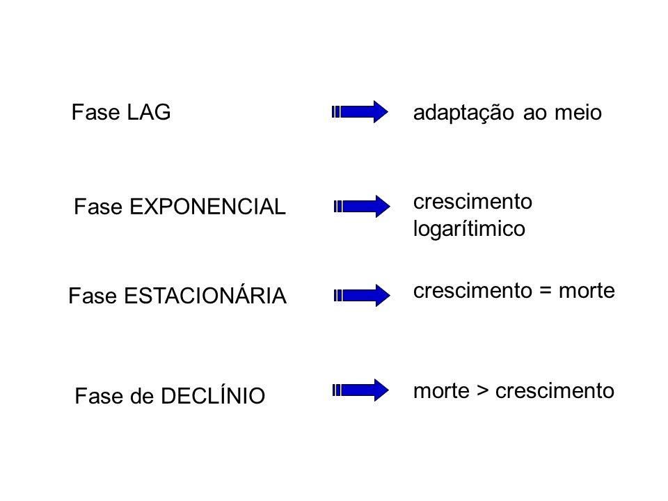 Fase LAG adaptação ao meio. crescimento logarítimico. Fase EXPONENCIAL. crescimento = morte. Fase ESTACIONÁRIA.