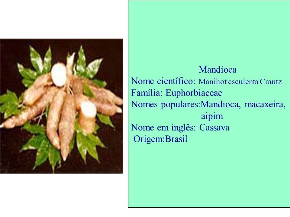Mandioca Nome científico: Manihot esculenta Crantz. Família: Euphorbiaceae. Nomes populares:Mandioca, macaxeira,