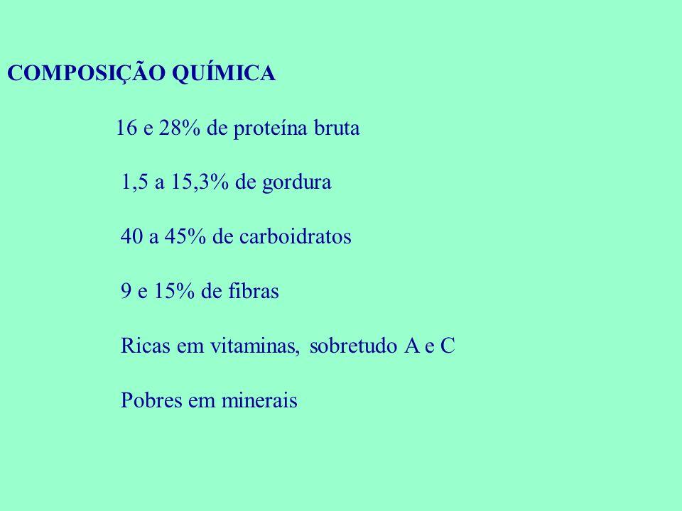 COMPOSIÇÃO QUÍMICA 16 e 28% de proteína bruta. 1,5 a 15,3% de gordura. 40 a 45% de carboidratos. 9 e 15% de fibras.
