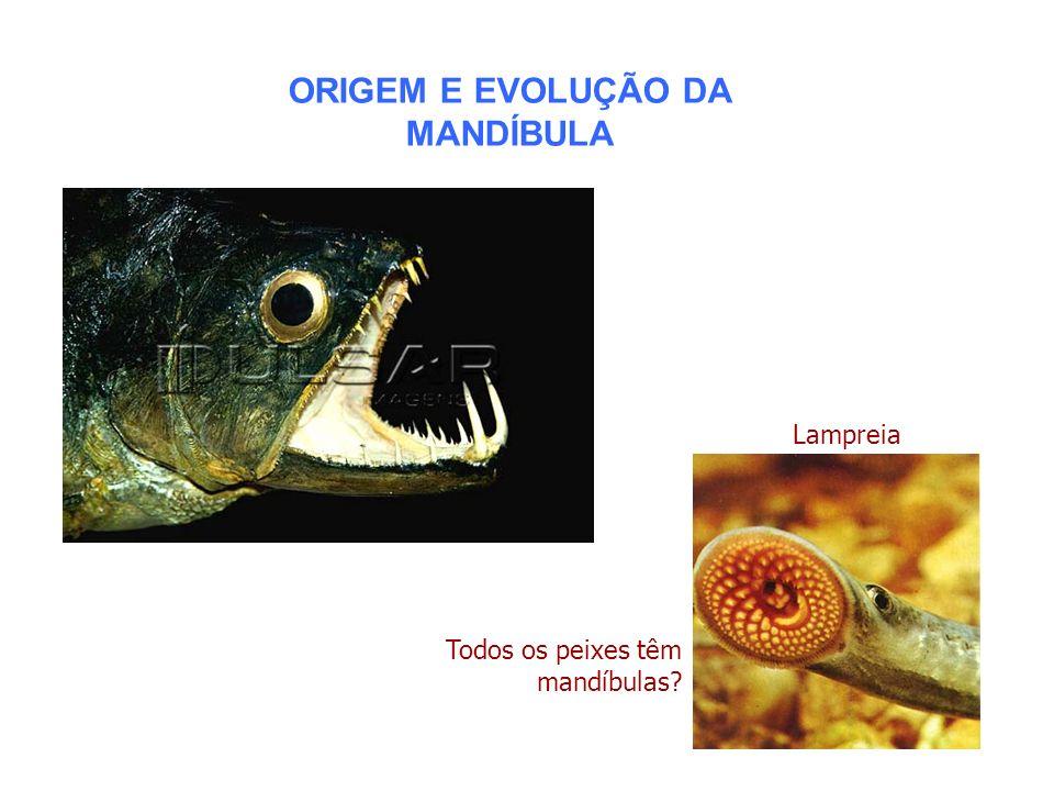 ORIGEM E EVOLUÇÃO DA MANDÍBULA