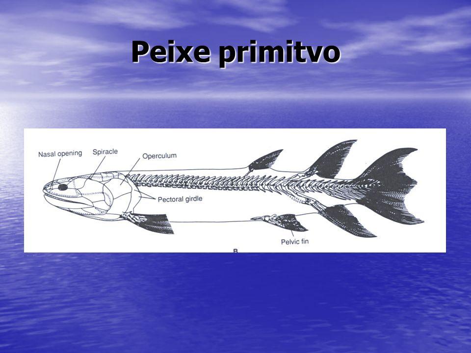 Peixe primitvo