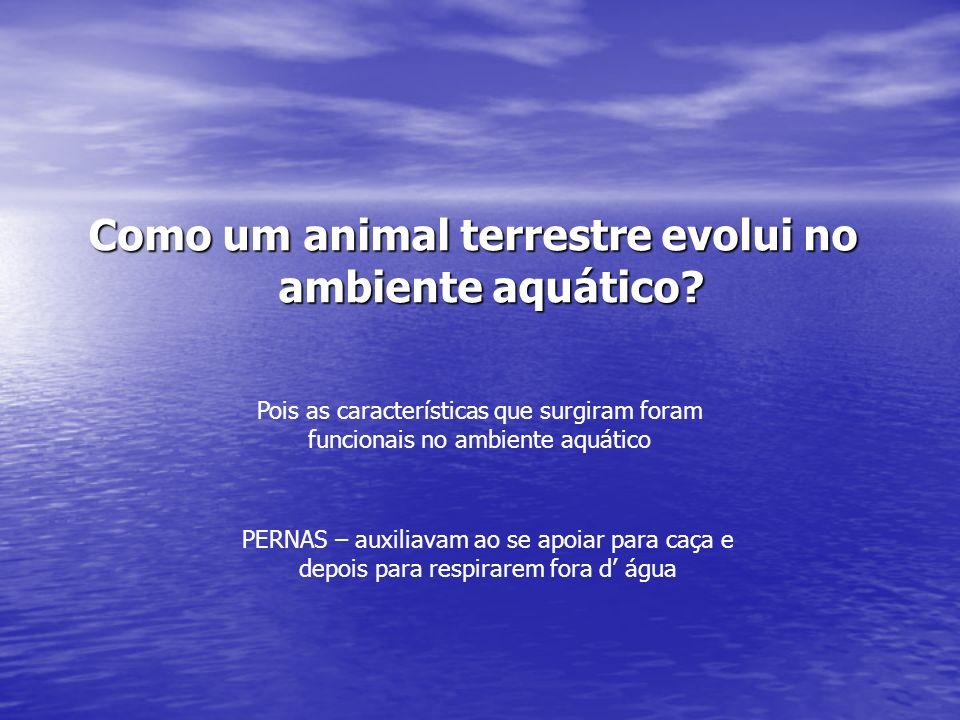 Como um animal terrestre evolui no ambiente aquático