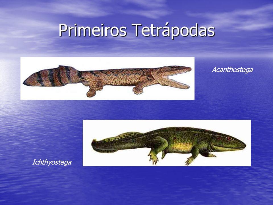 Primeiros Tetrápodas Acanthostega Ichthyostega