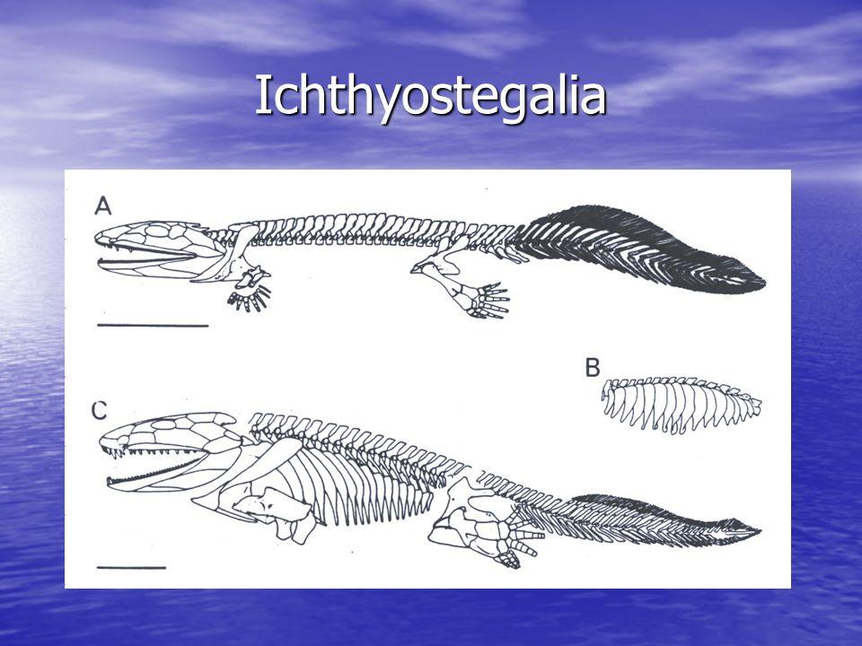 Ichthyostegalia