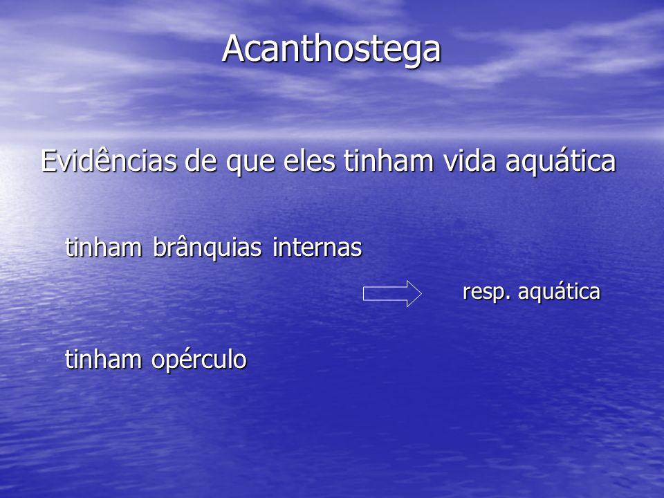 Acanthostega Evidências de que eles tinham vida aquática