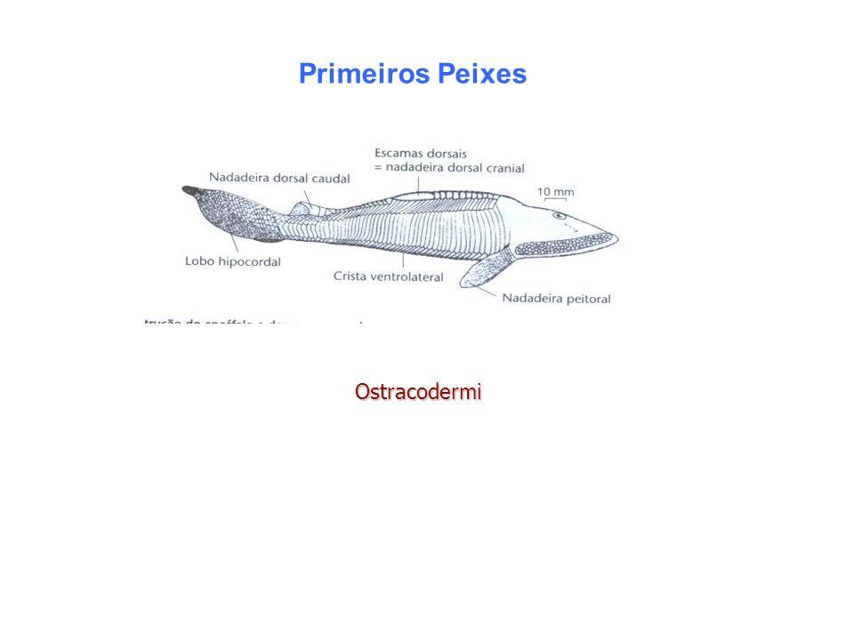 Primeiros Peixes Ostracodermi