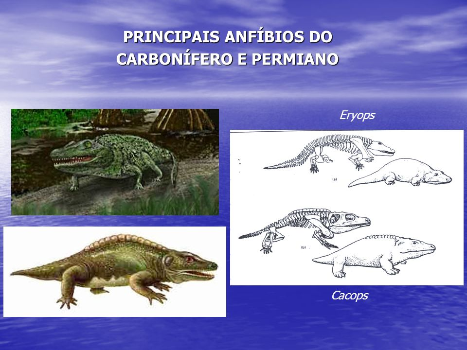 PRINCIPAIS ANFÍBIOS DO CARBONÍFERO E PERMIANO