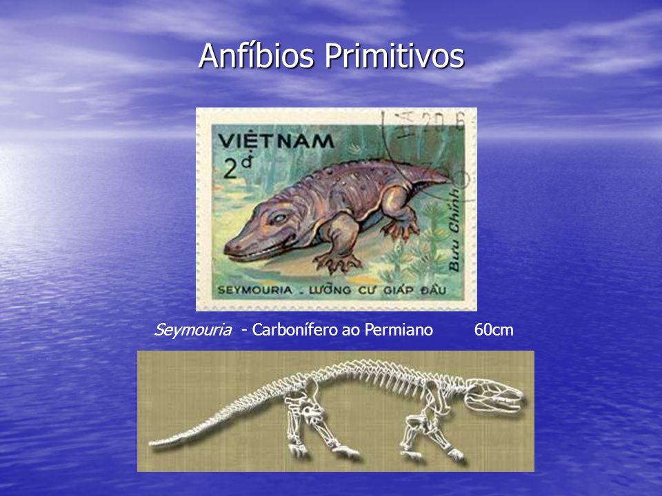 Seymouria - Carbonífero ao Permiano 60cm