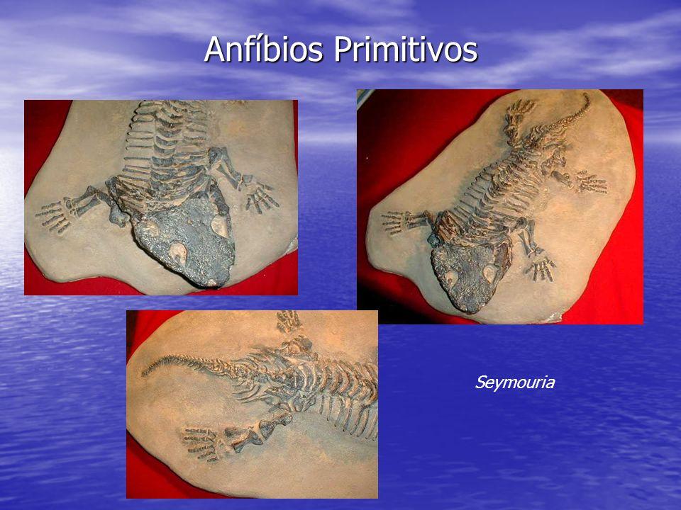 Anfíbios Primitivos Seymouria