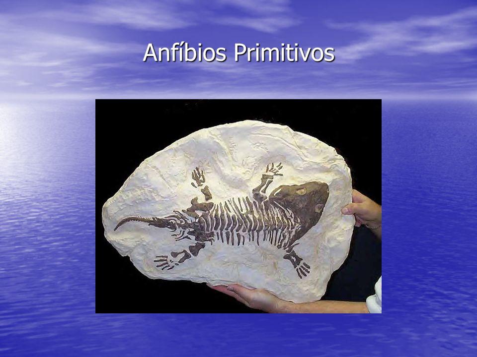 Anfíbios Primitivos