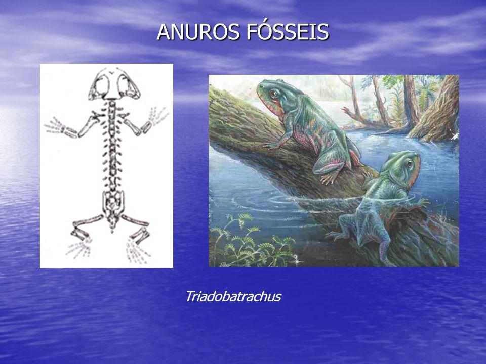 ANUROS FÓSSEIS Triadobatrachus