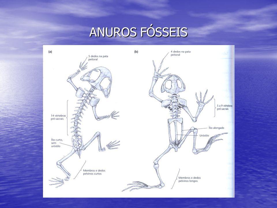 ANUROS FÓSSEIS