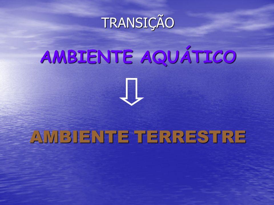 TRANSIÇÃO AMBIENTE AQUÁTICO AMBIENTE TERRESTRE