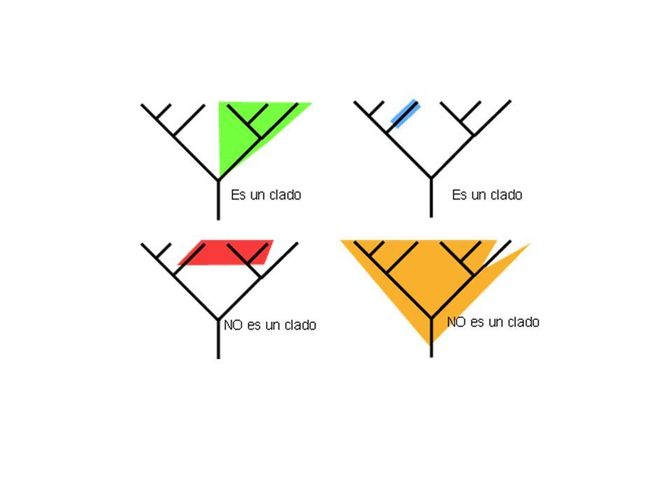 Grupos naturais (monofiléticos) Grupos artificiais (parafiléticos)