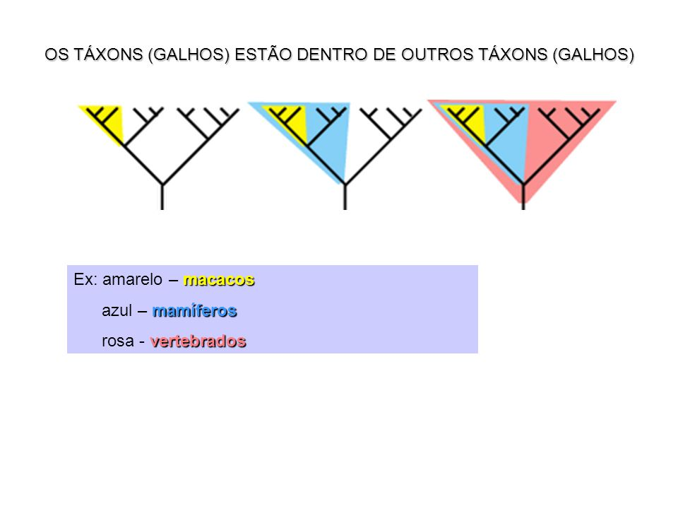 OS TÁXONS (GALHOS) ESTÃO DENTRO DE OUTROS TÁXONS (GALHOS)