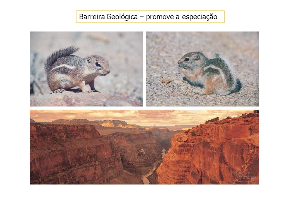 Barreira Geológica – promove a especiação