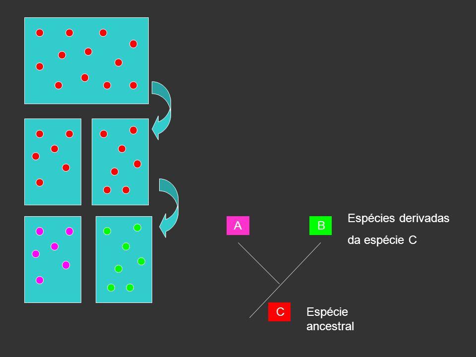 Espécies derivadas da espécie C A B C Espécie ancestral