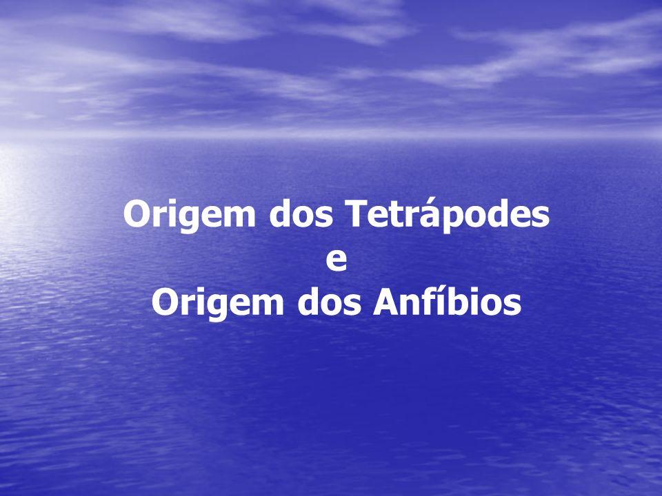 Origem dos Tetrápodes e Origem dos Anfíbios