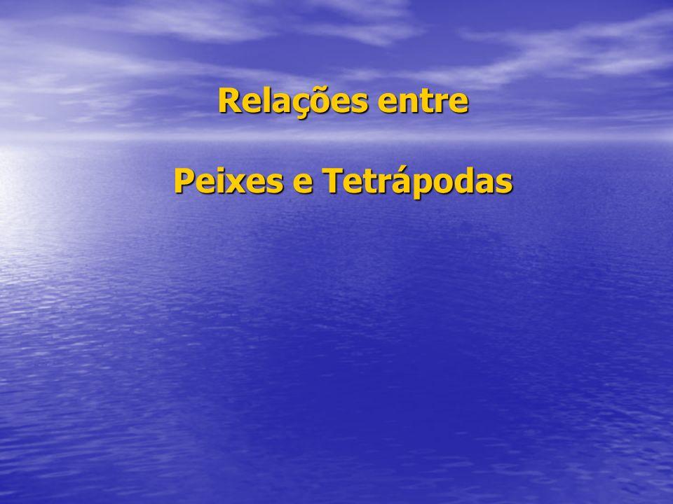 Relações entre Peixes e Tetrápodas