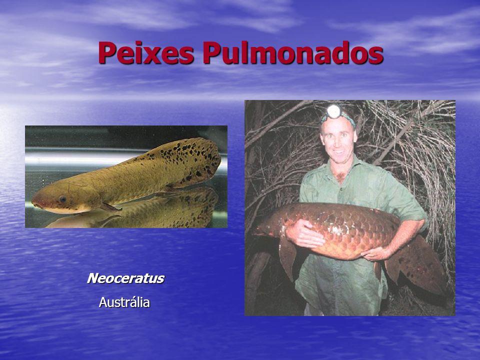 Peixes Pulmonados Neoceratus Austrália