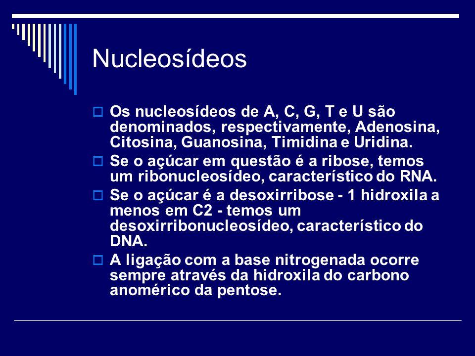 Nucleosídeos Os nucleosídeos de A, C, G, T e U são denominados, respectivamente, Adenosina, Citosina, Guanosina, Timidina e Uridina.