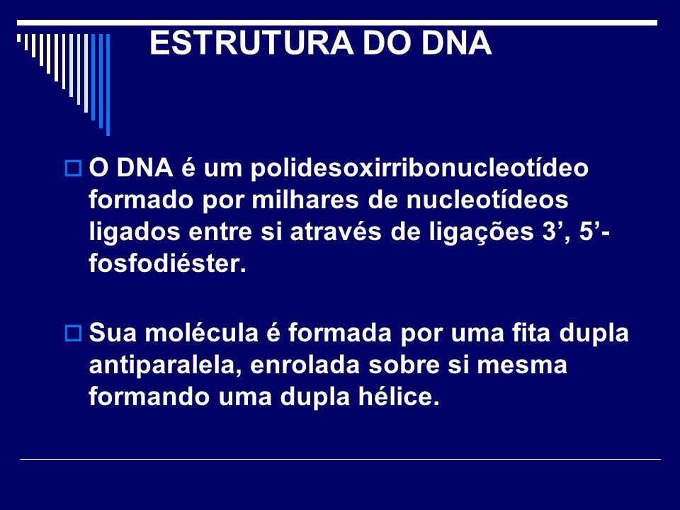 ESTRUTURA DO DNA O DNA é um polidesoxirribonucleotídeo formado por milhares de nucleotídeos ligados entre si através de ligações 3', 5'-fosfodiéster.