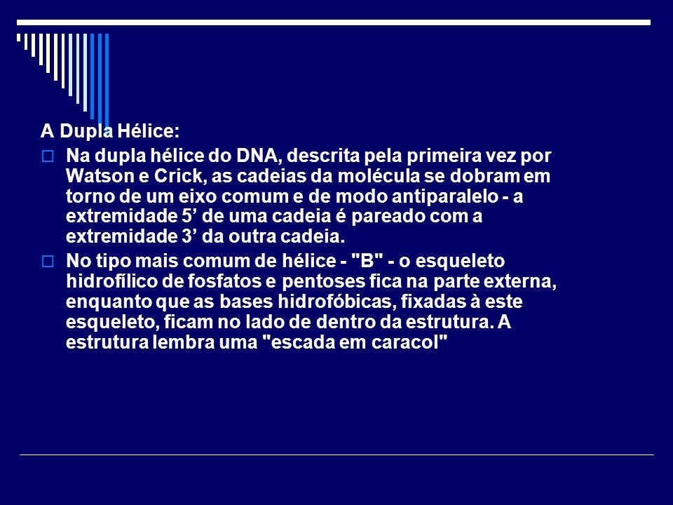 A Dupla Hélice:
