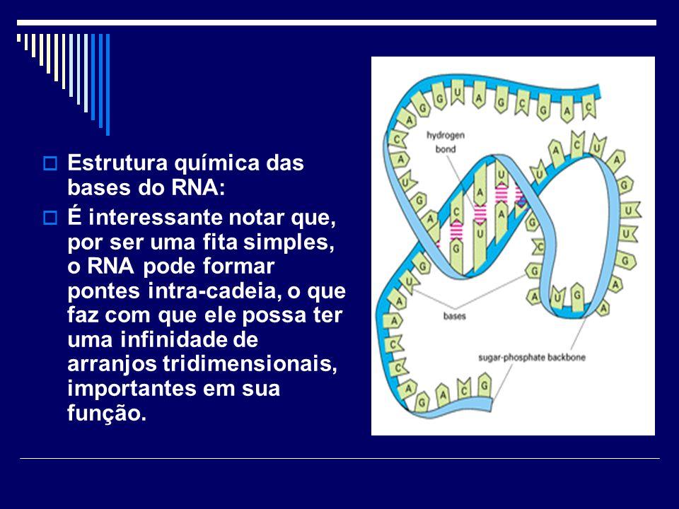 Estrutura química das bases do RNA:
