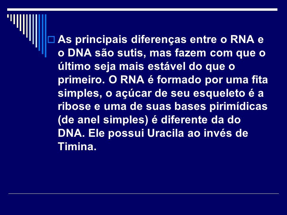 As principais diferenças entre o RNA e o DNA são sutis, mas fazem com que o último seja mais estável do que o primeiro.