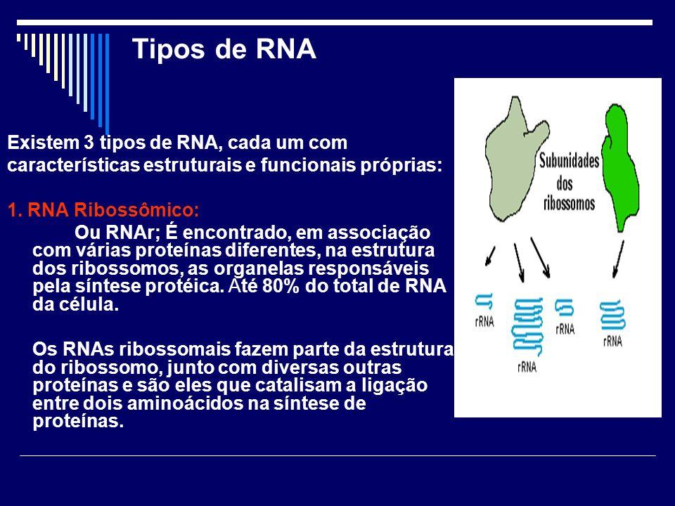 Tipos de RNA Existem 3 tipos de RNA, cada um com