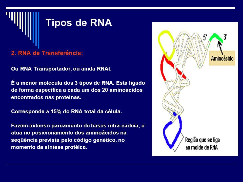 Tipos de RNA 2. RNA de Transferência: